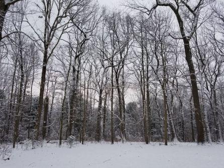 WinterWonderland20172